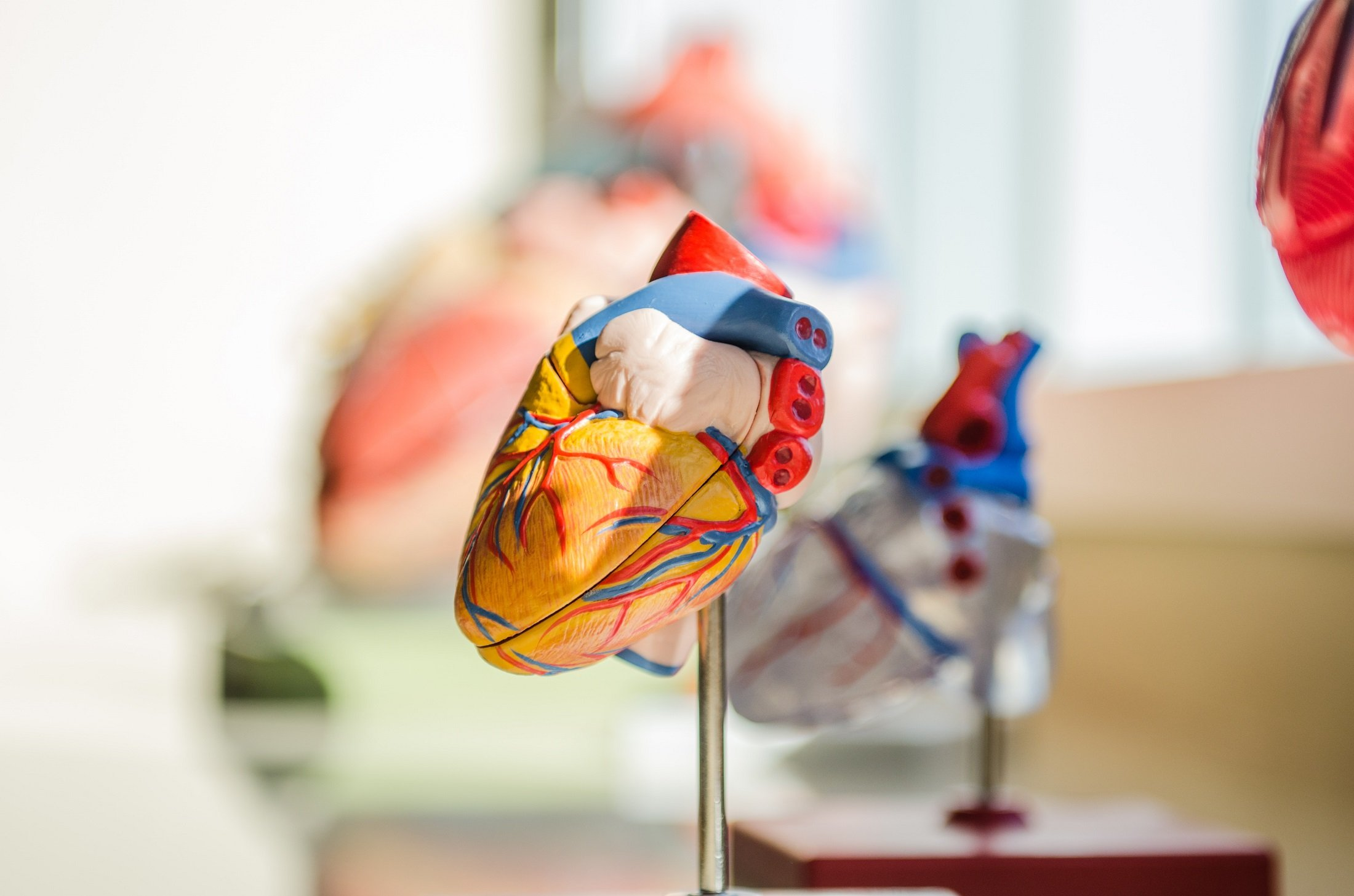 Cardiovascular health and how you can improve it